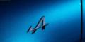 Essai Alpine A110 Première Edition Ecusson Aile Avant
